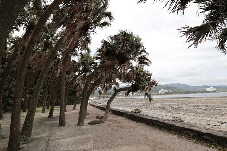 宮崎 青島 には亜熱帯植物が生えている