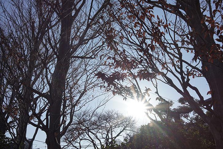 α7III + SAMYANG 35mm 試し撮り