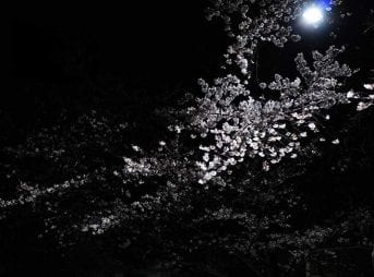 a6400のISO感度を確かめがてらに夜桜を撮る