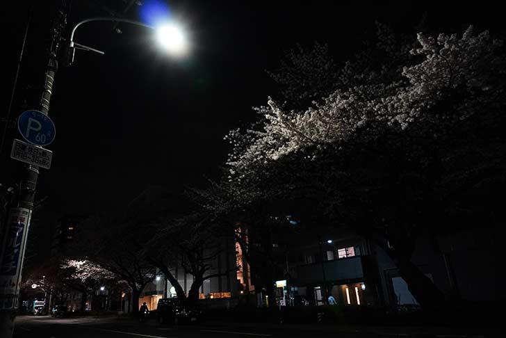 a6400の高感度特性を確かめがてらに夜桜を撮る