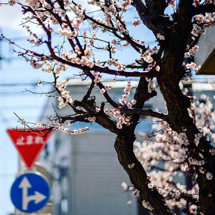 Spring comes around!